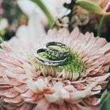 Wedding rings on gerber daisy